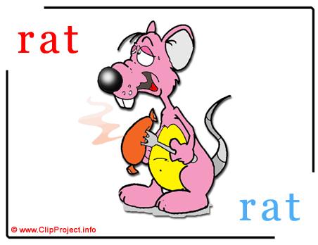 Rat - rat abc image dictionnaire anglais francais
