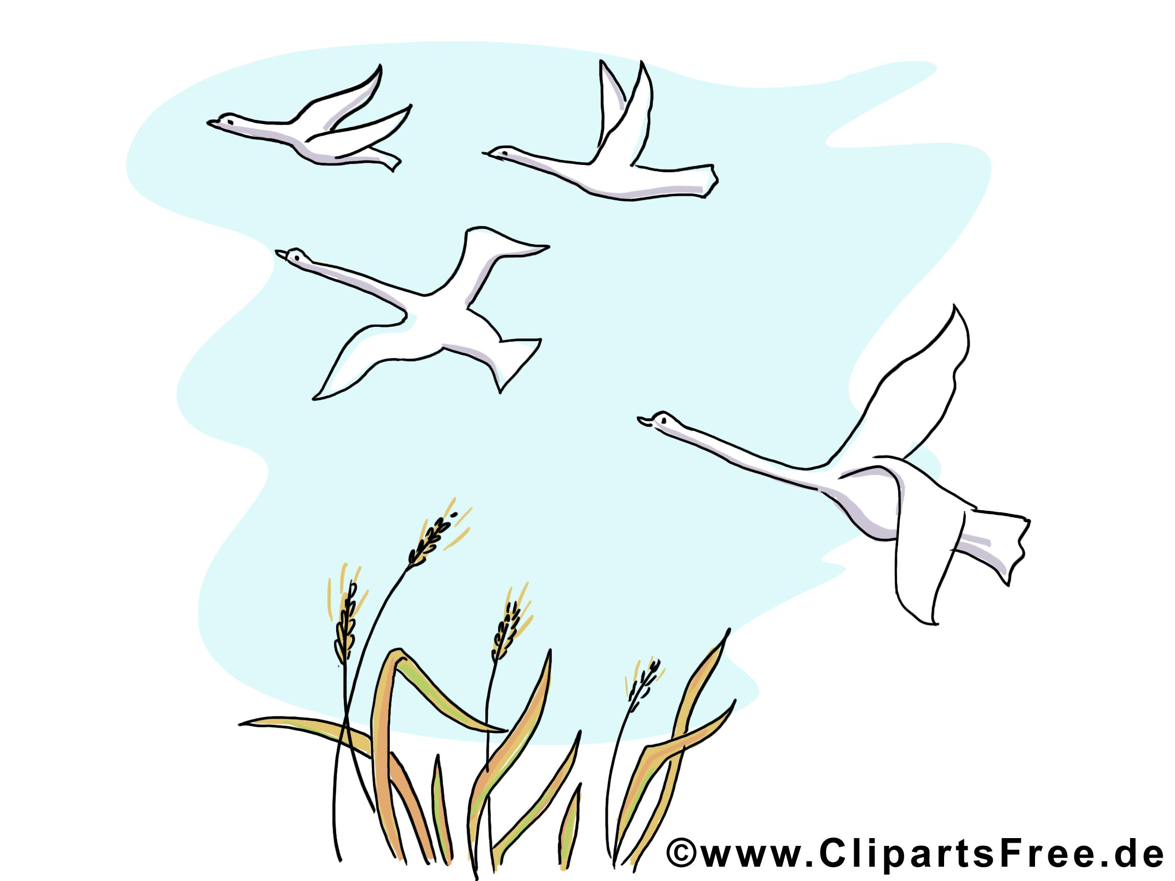 Oies images – Automne dessins gratuits