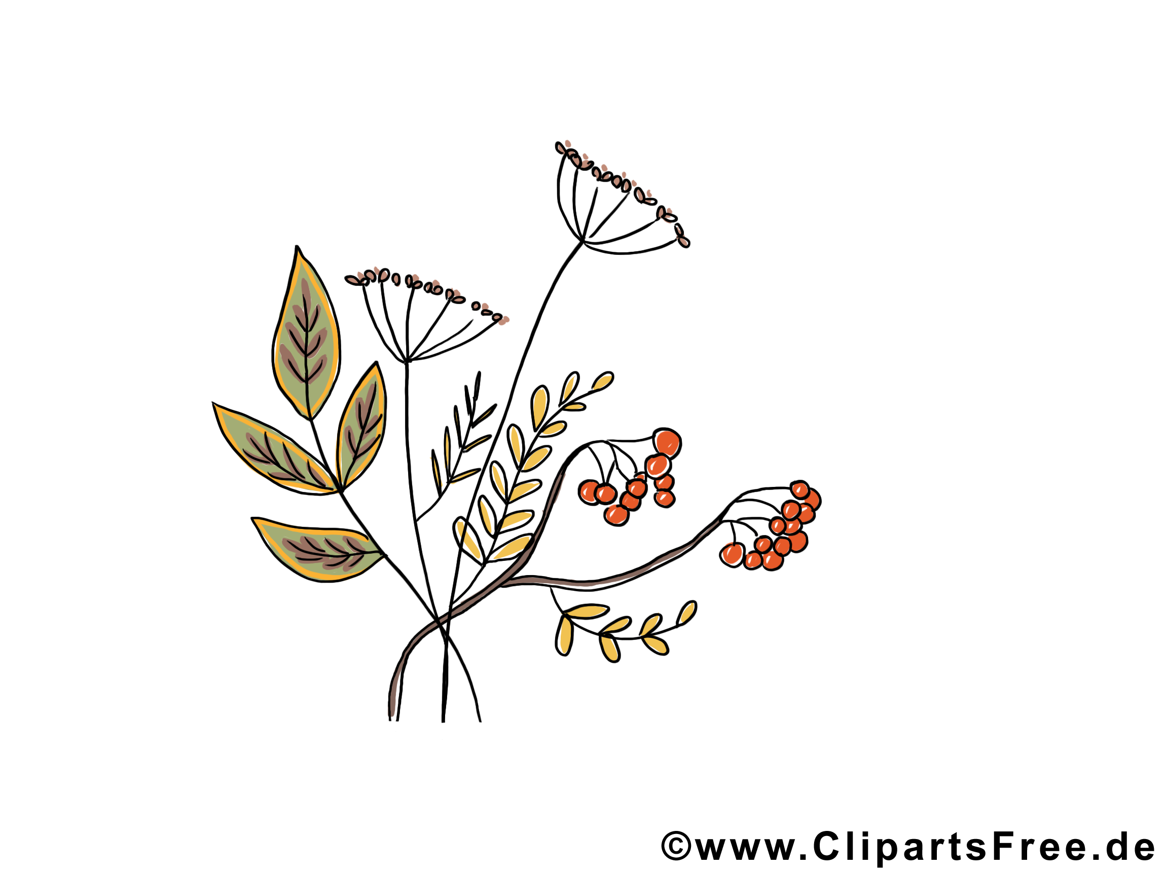 Sorbier image gratuite – Automne illustration