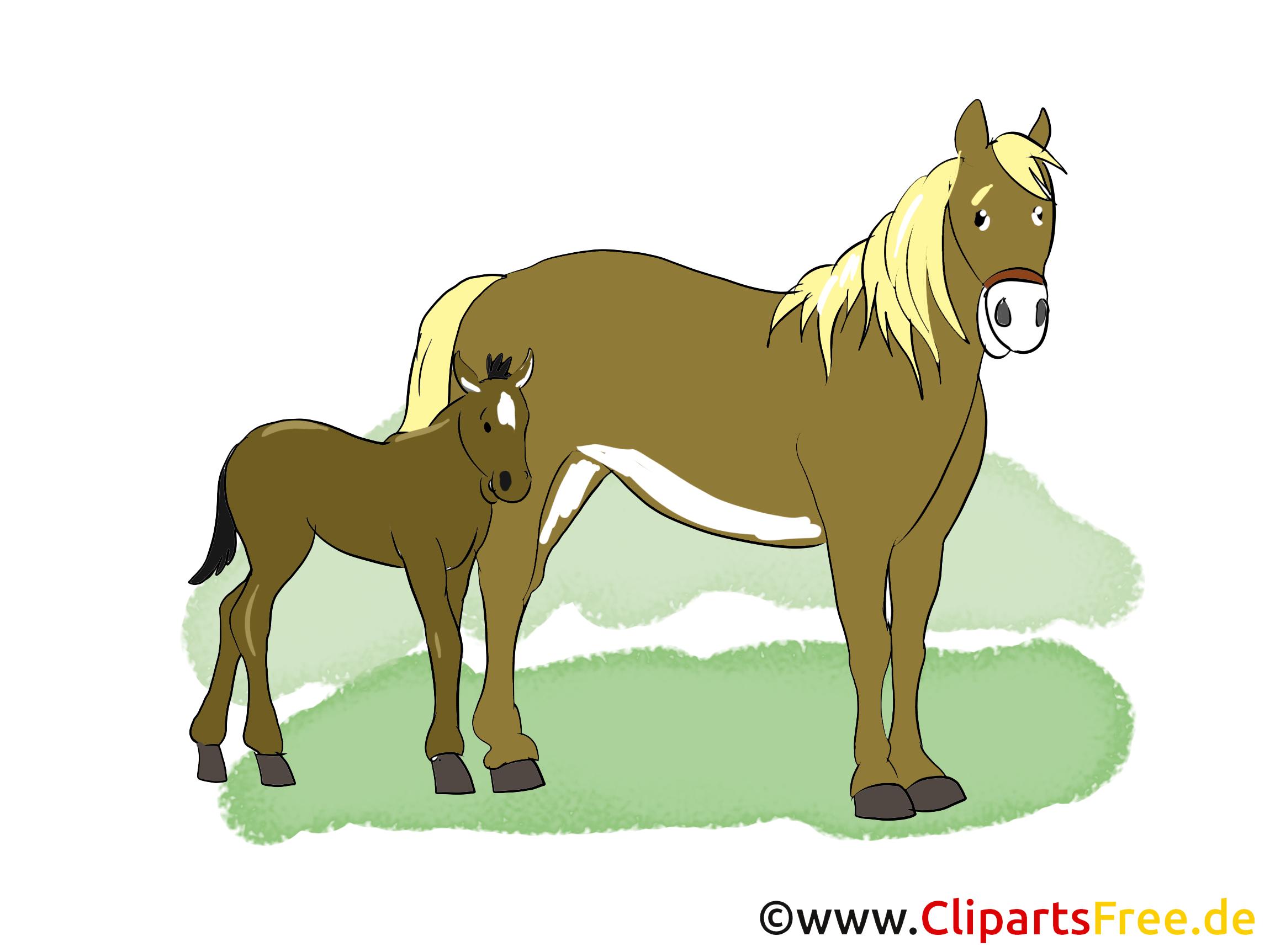 Poulain dessins gratuits – Cheval clipart