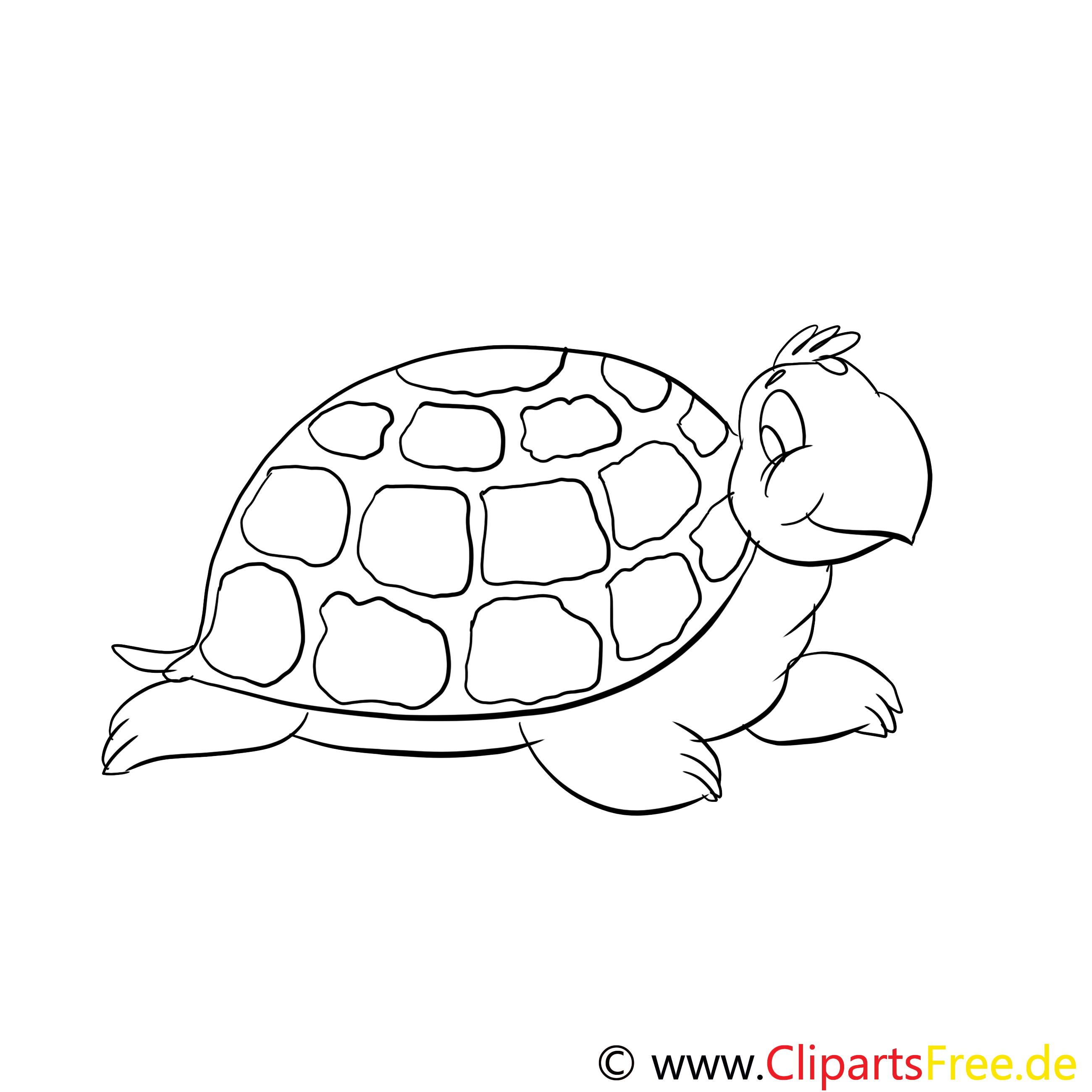 Coloriage tortue illustration à télécharger