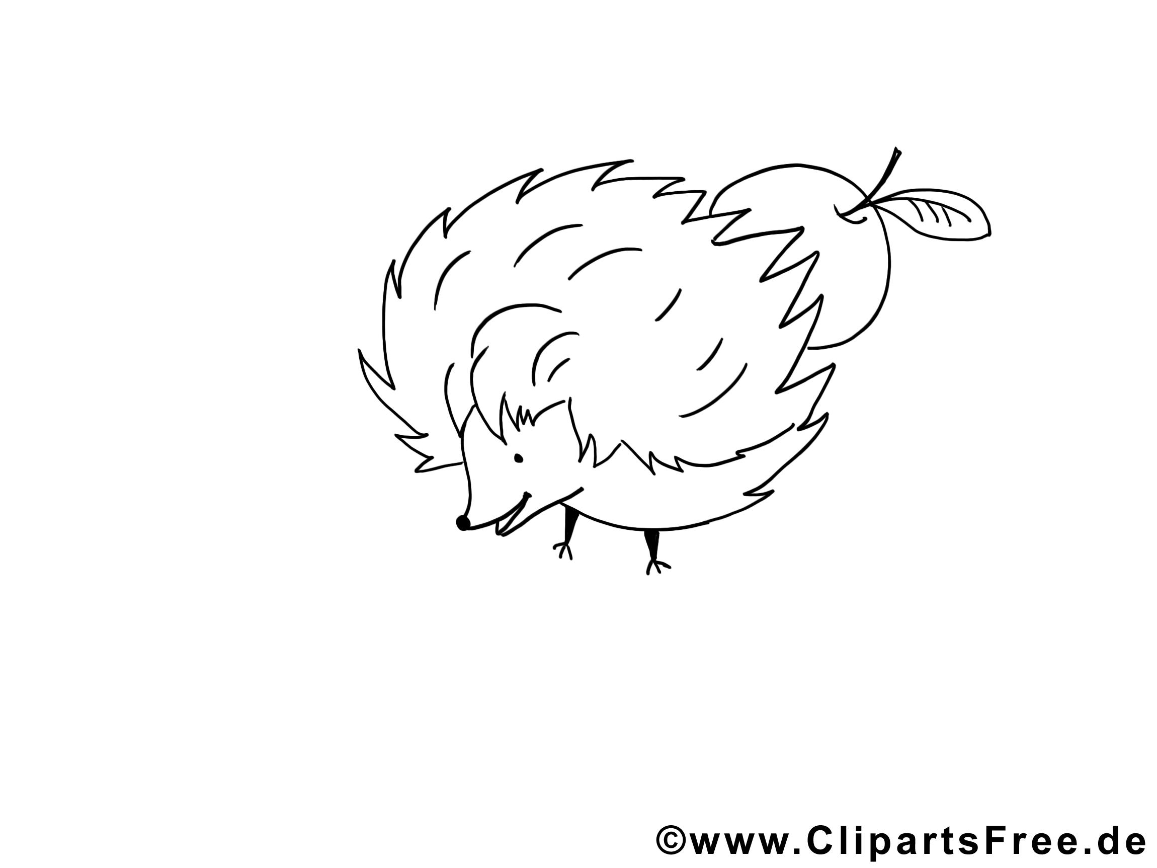 Hérisson images – Animal gratuit à imprimer