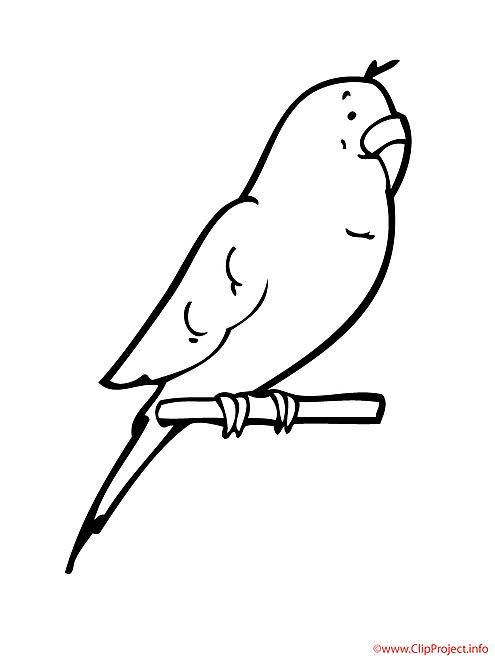 Perroquet coloriage