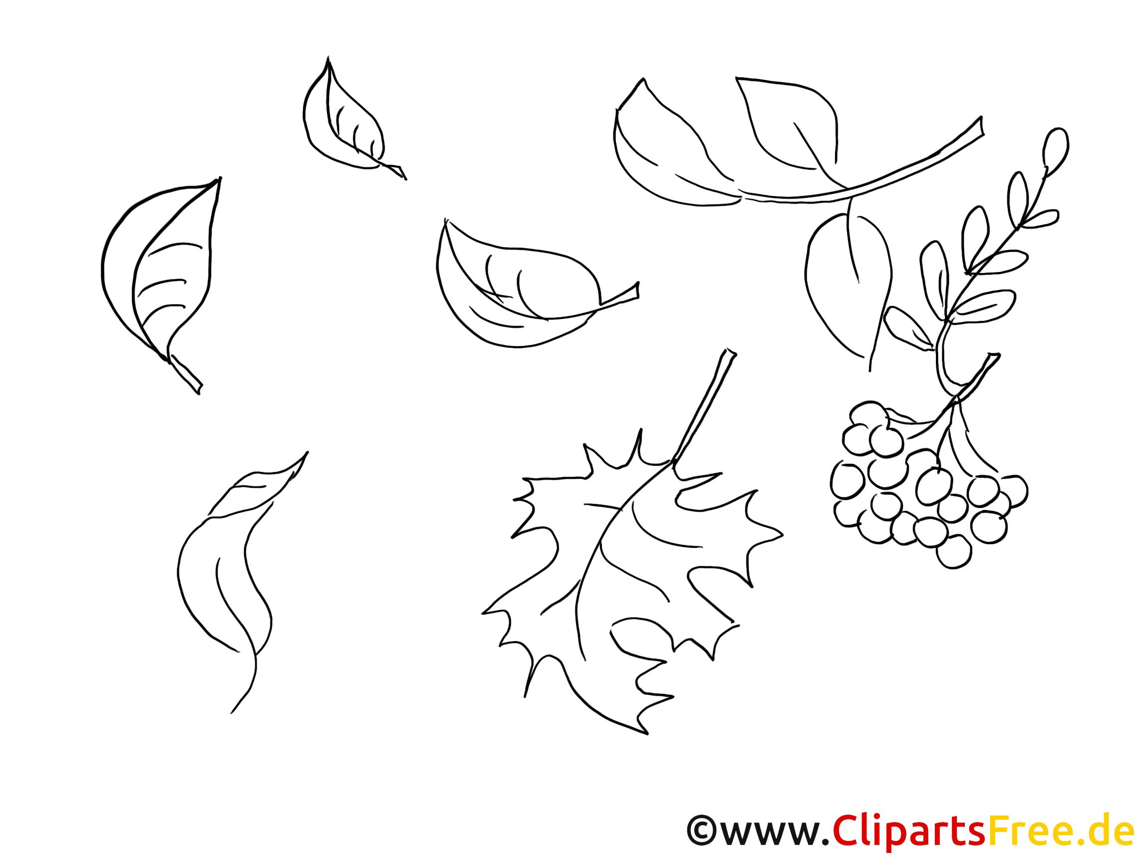 sorbier images gratuites  automne à colorier  automne