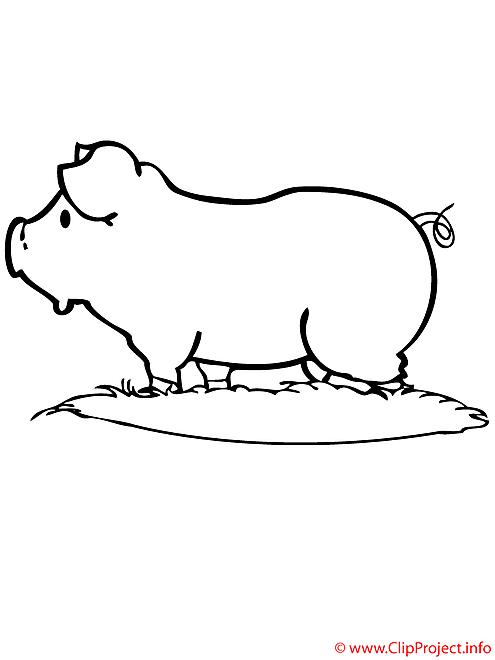 Porc coloriage