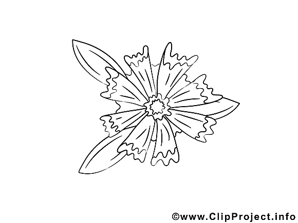 Floraison images gratuites – Fleurs à colorier