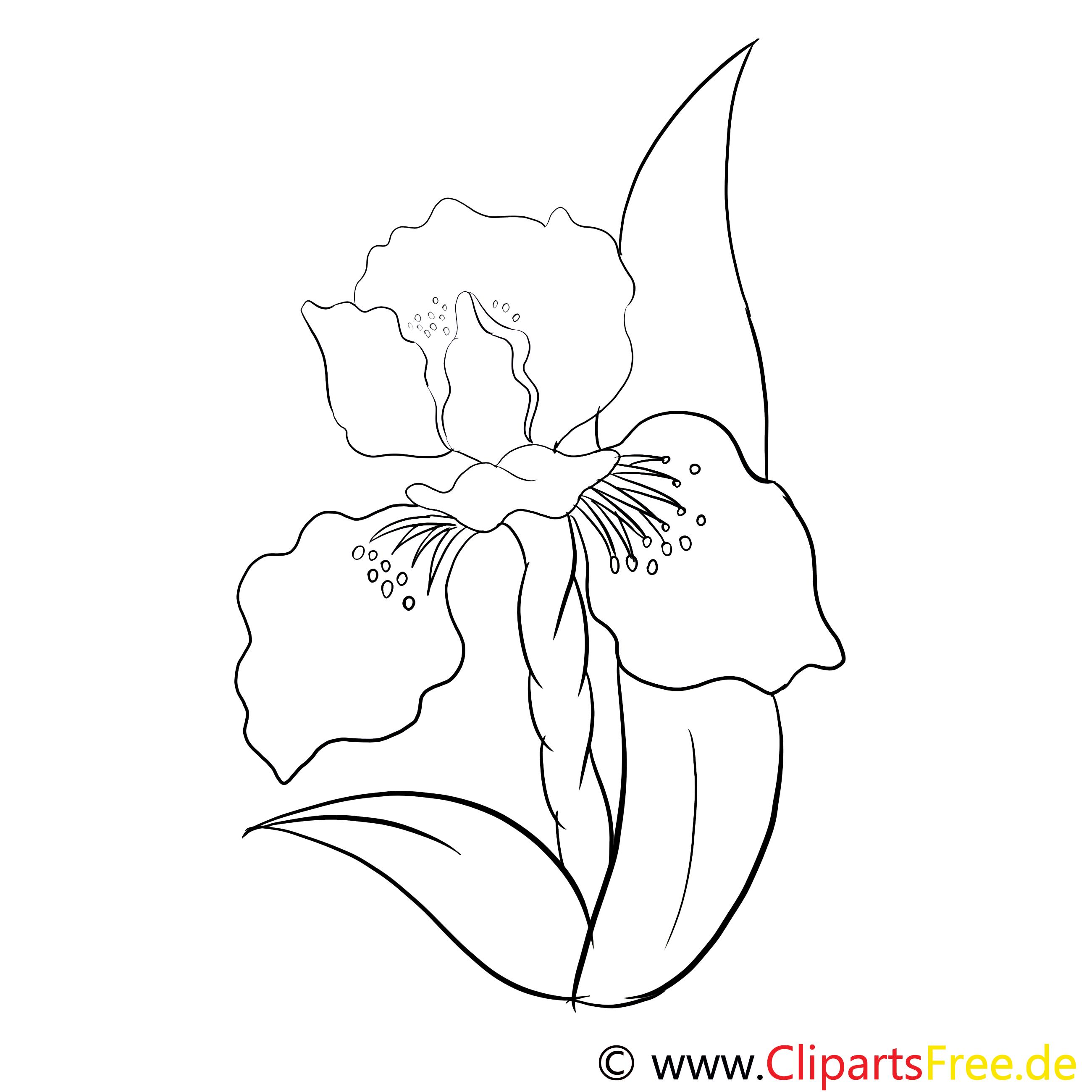 Illustration fleurs à imprimer