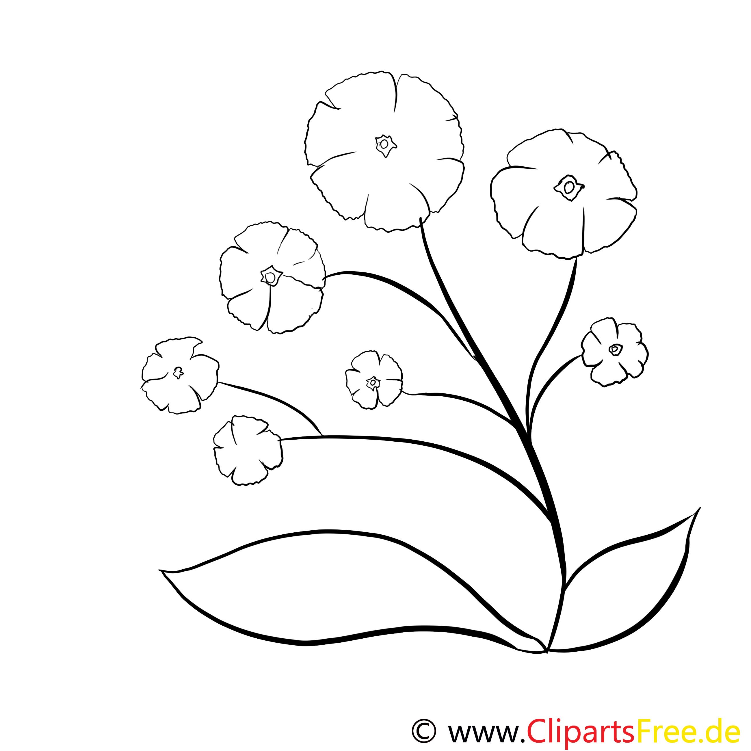Image gratuite fleurs à colorier