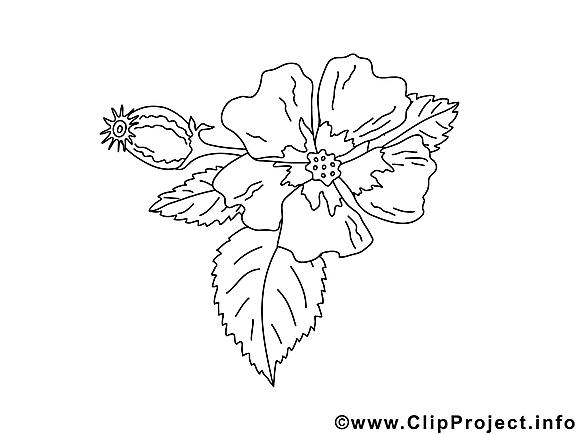 Images gratuites fleurs à colorier