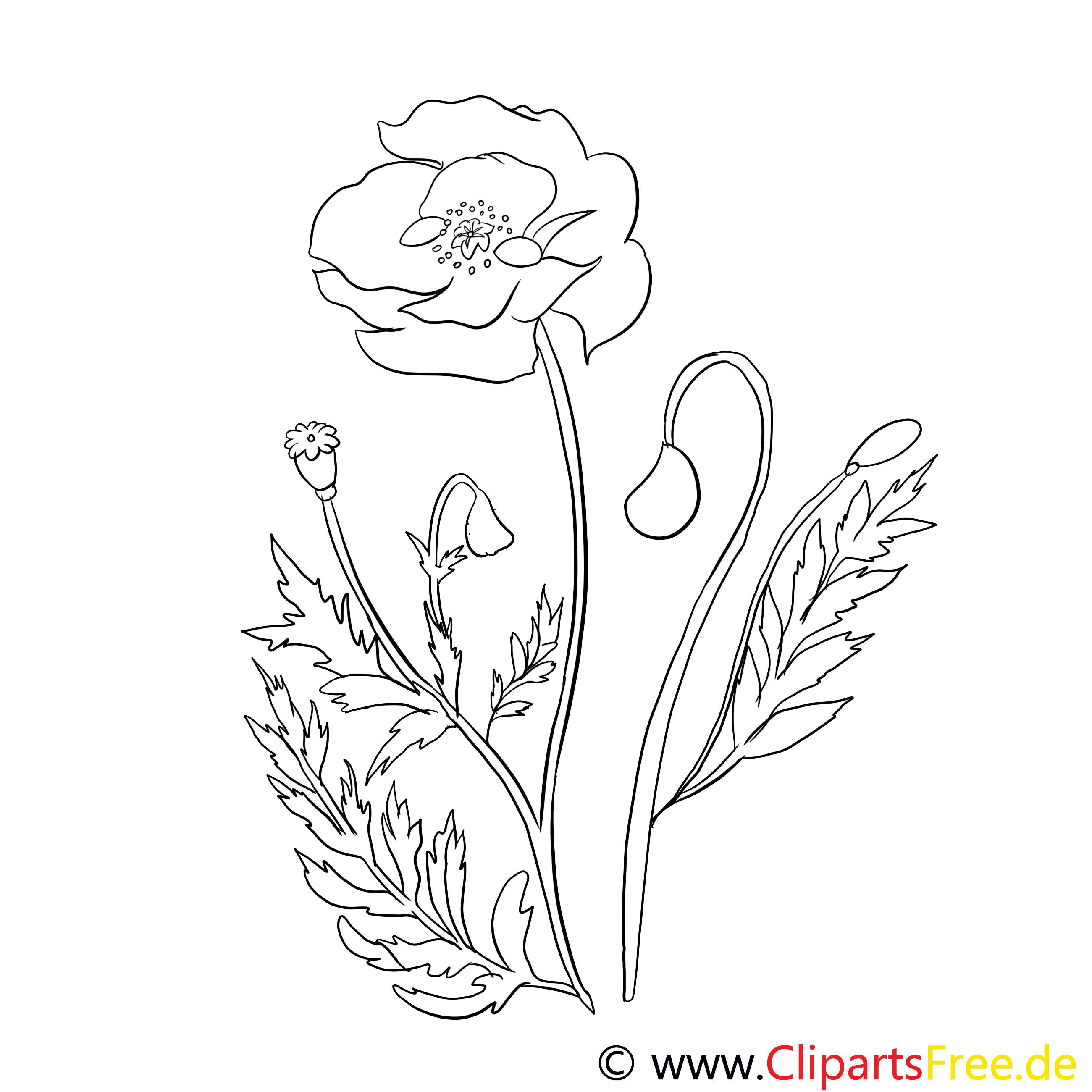 Pavot clipart gratuit – Fleurs à colorier