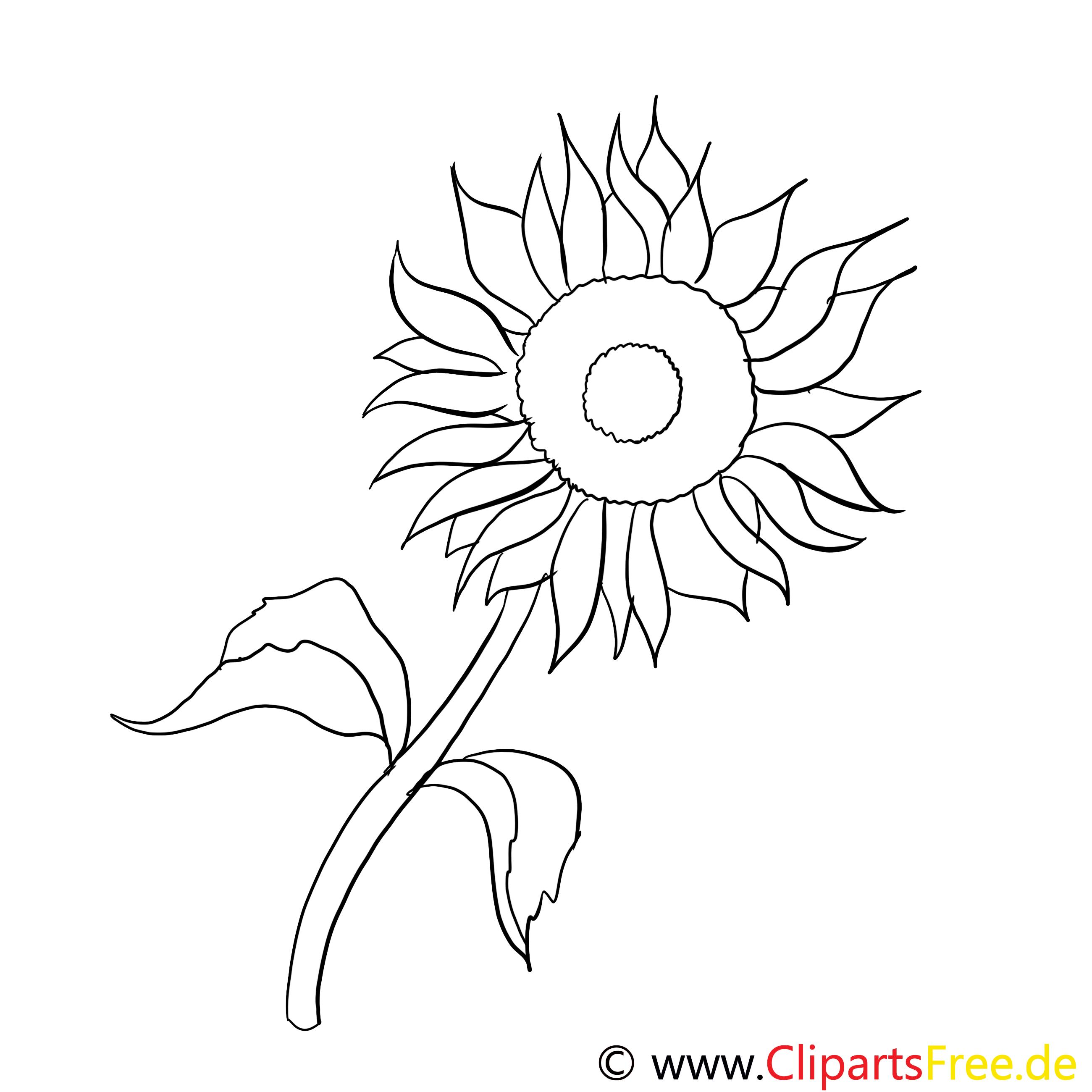Tournesol clip art gratuit – Fleurs à imprimer