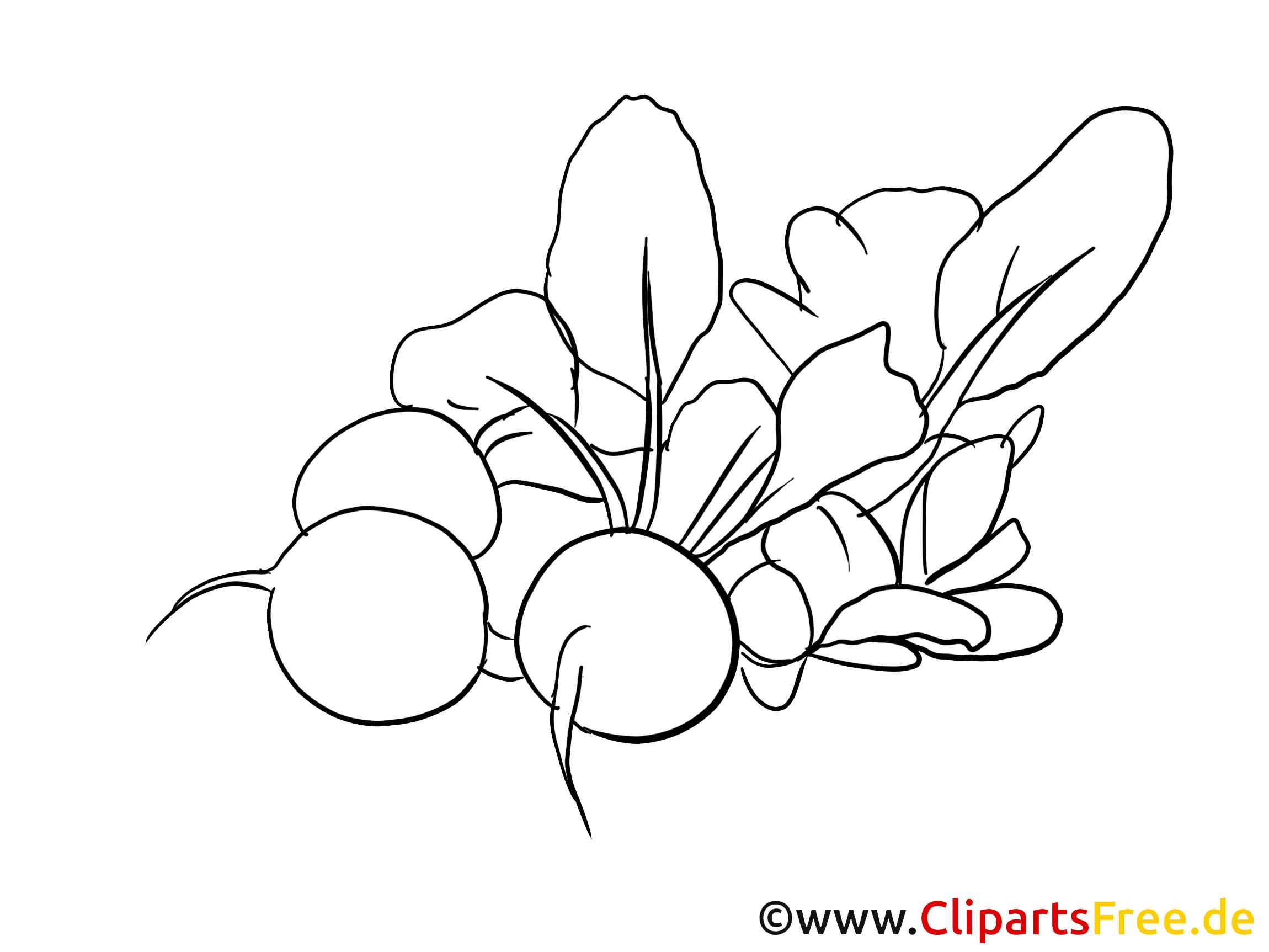 Radis image à télécharger – Légumes à colorier