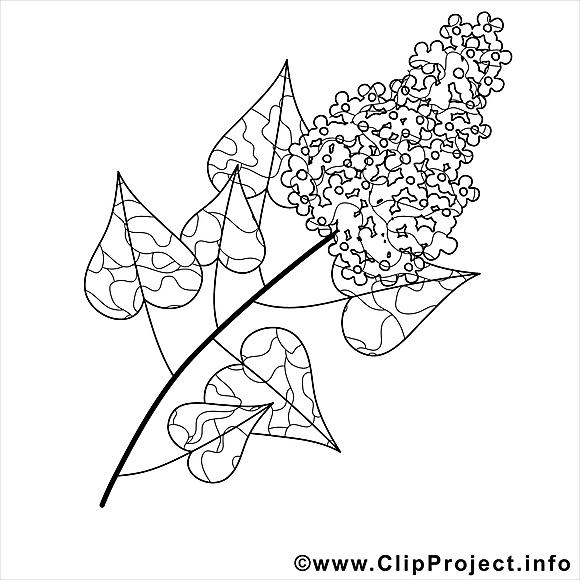 Lilas image gratuite printemps colorier printemps - Dessin de lilas ...