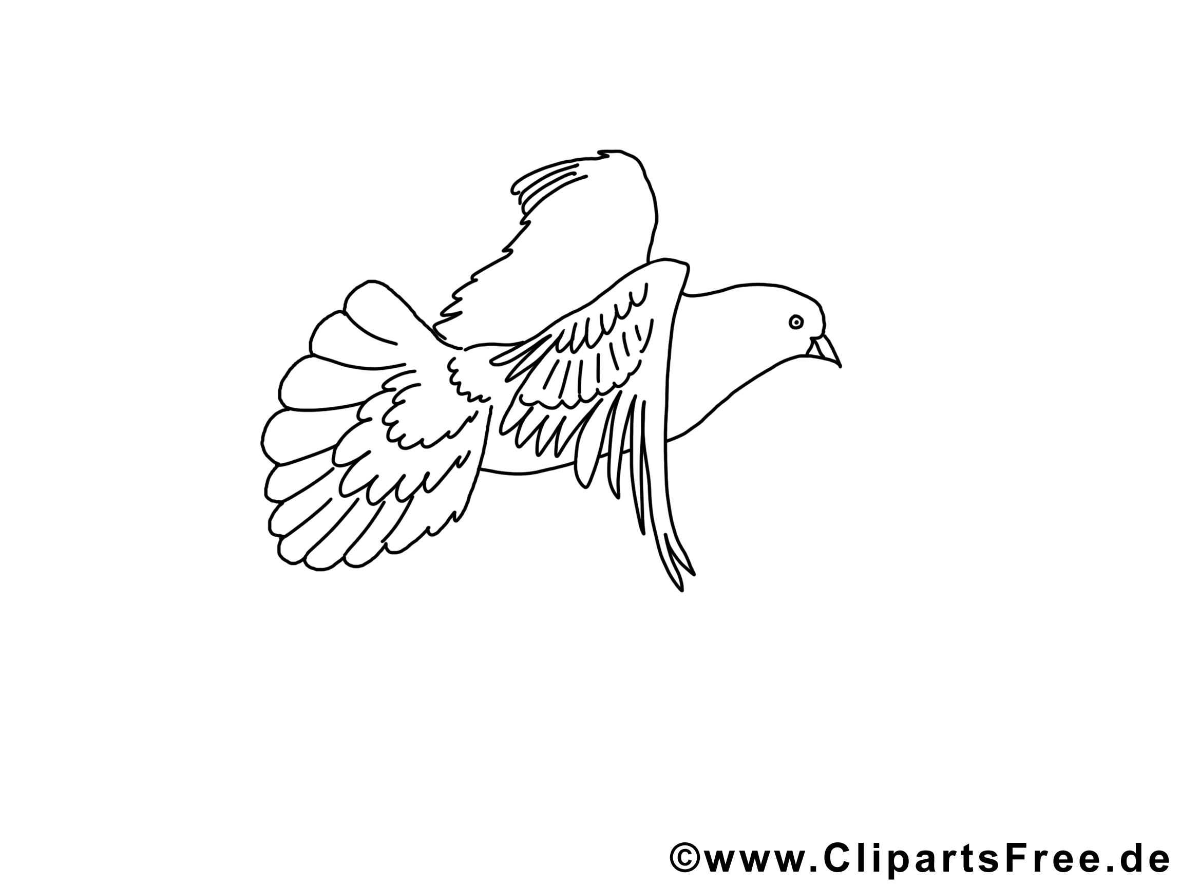Dessin colombe pentec te gratuits imprimer pentec te - Colombe coloriage ...