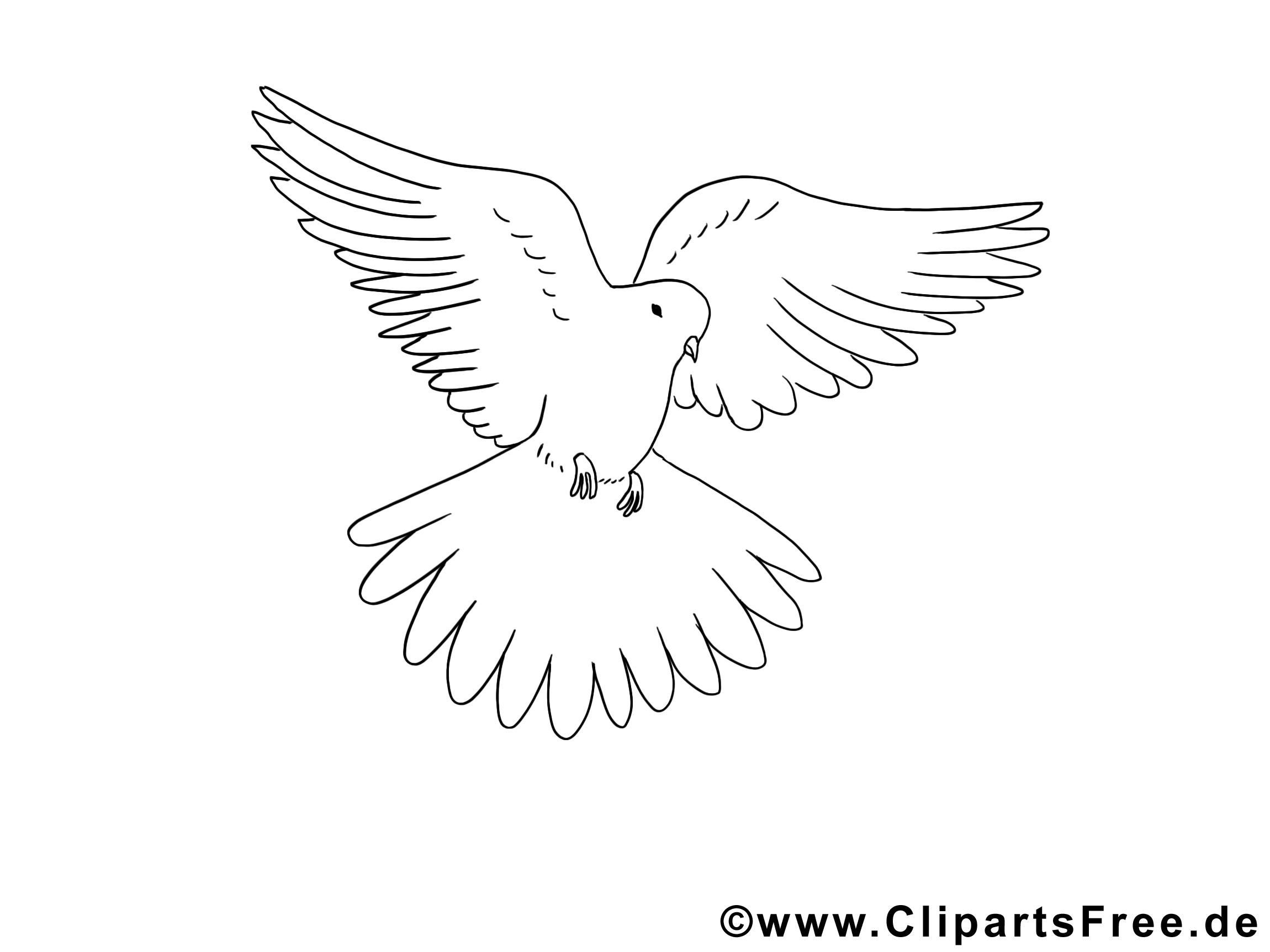 Top Illustration colombe – Pentecôte à imprimer - Pentecôte coloriages  WC32