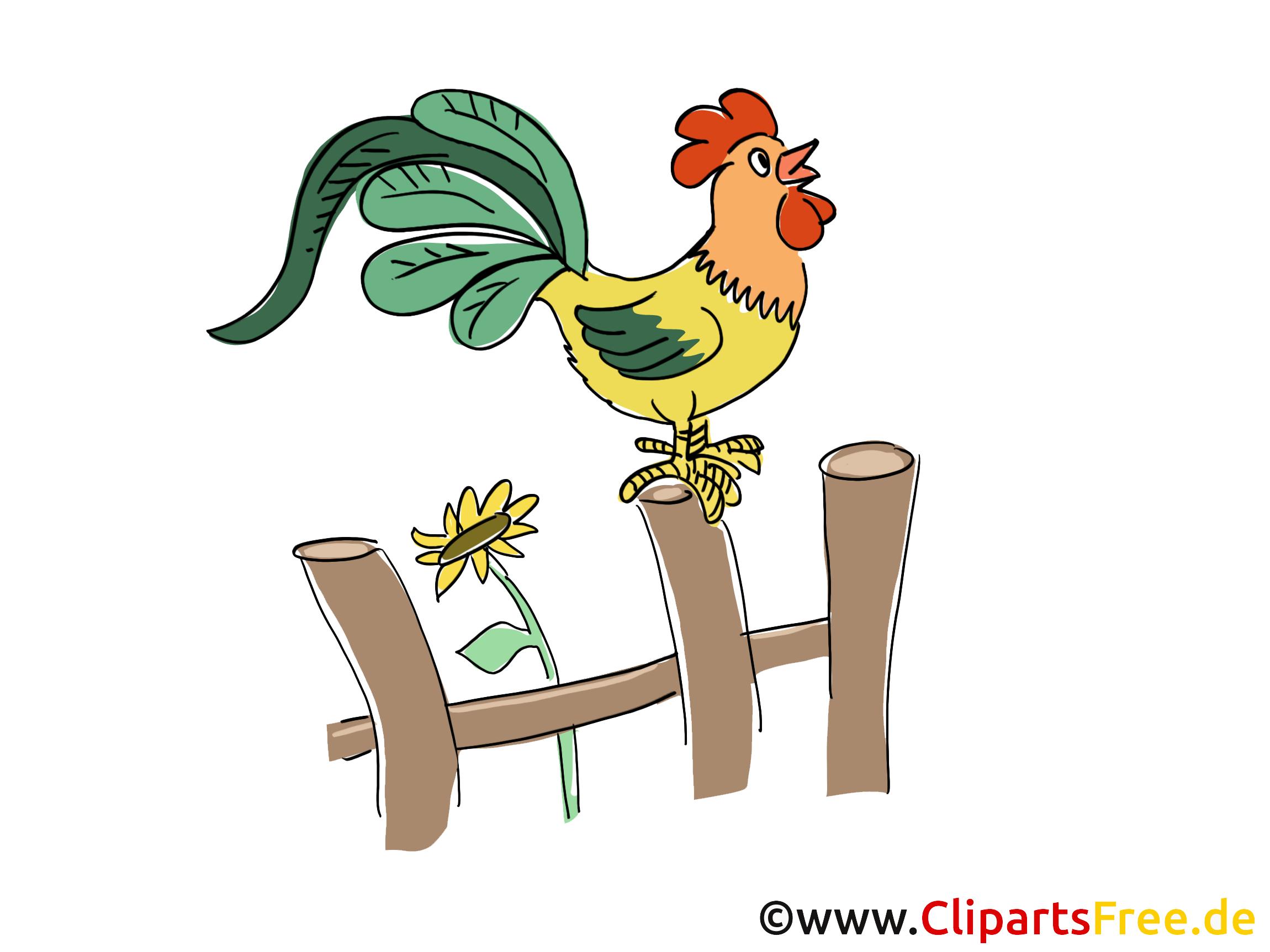 Coq dessin – Ferme cliparts à télécharger