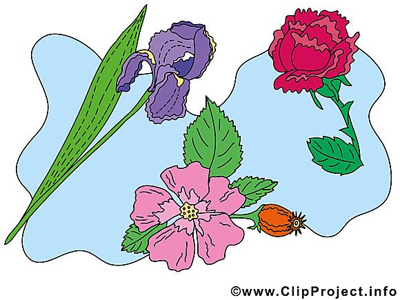 Fleurs image gratuite  illustration