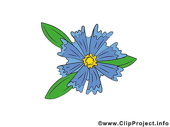 Bleuet clip art gratuit – Fleurs dessin
