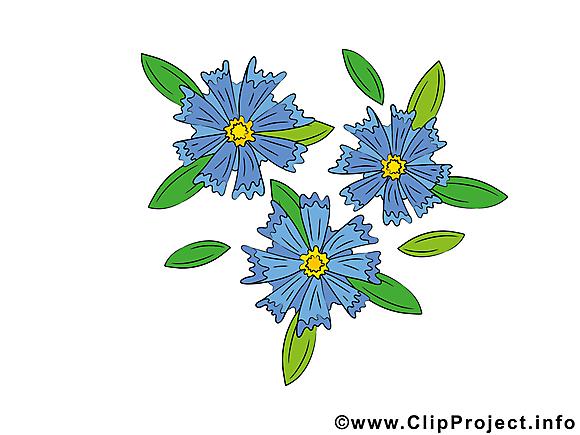 Bleuet images gratuites – Fleurs clipart