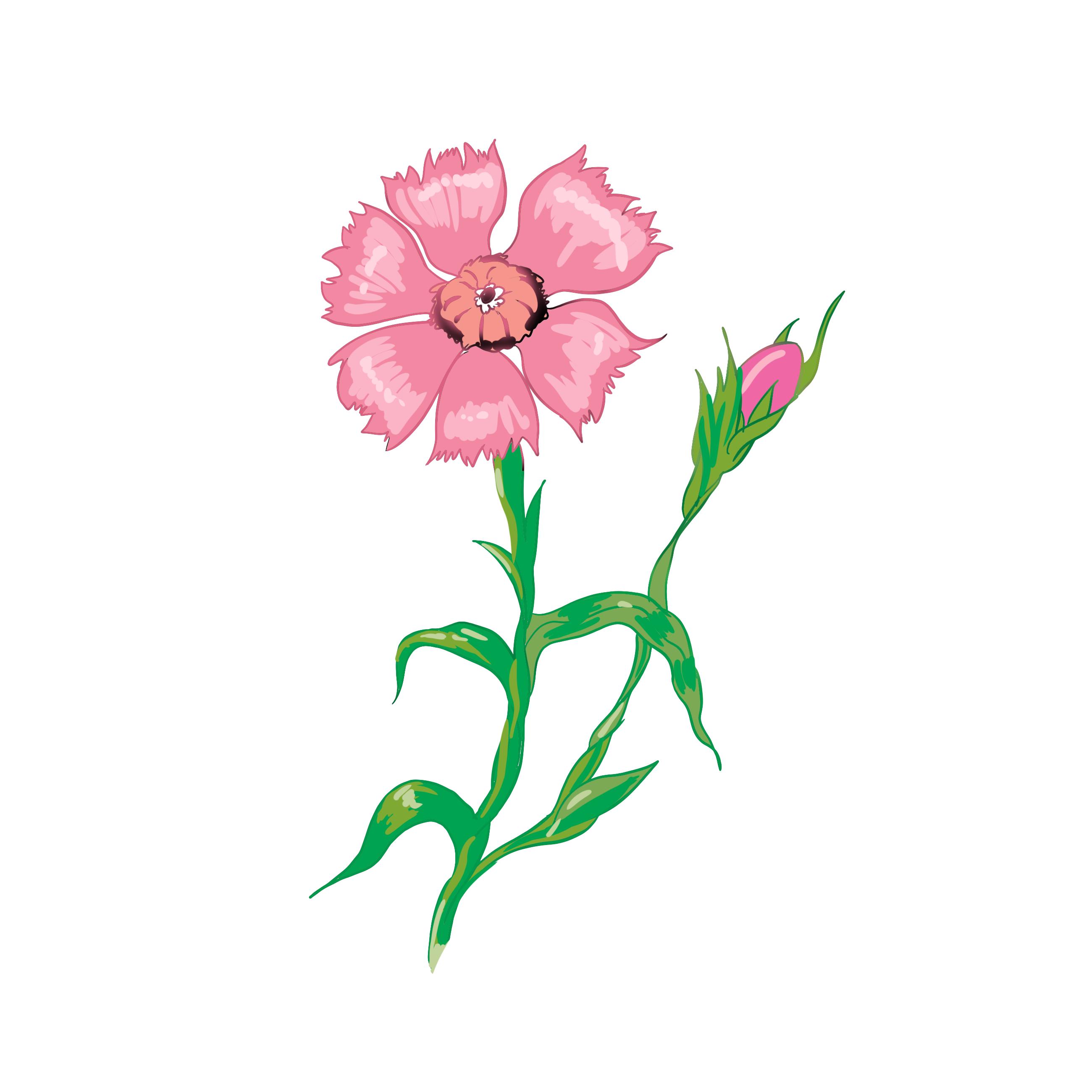 Images Clipart Gratuites Fleurs