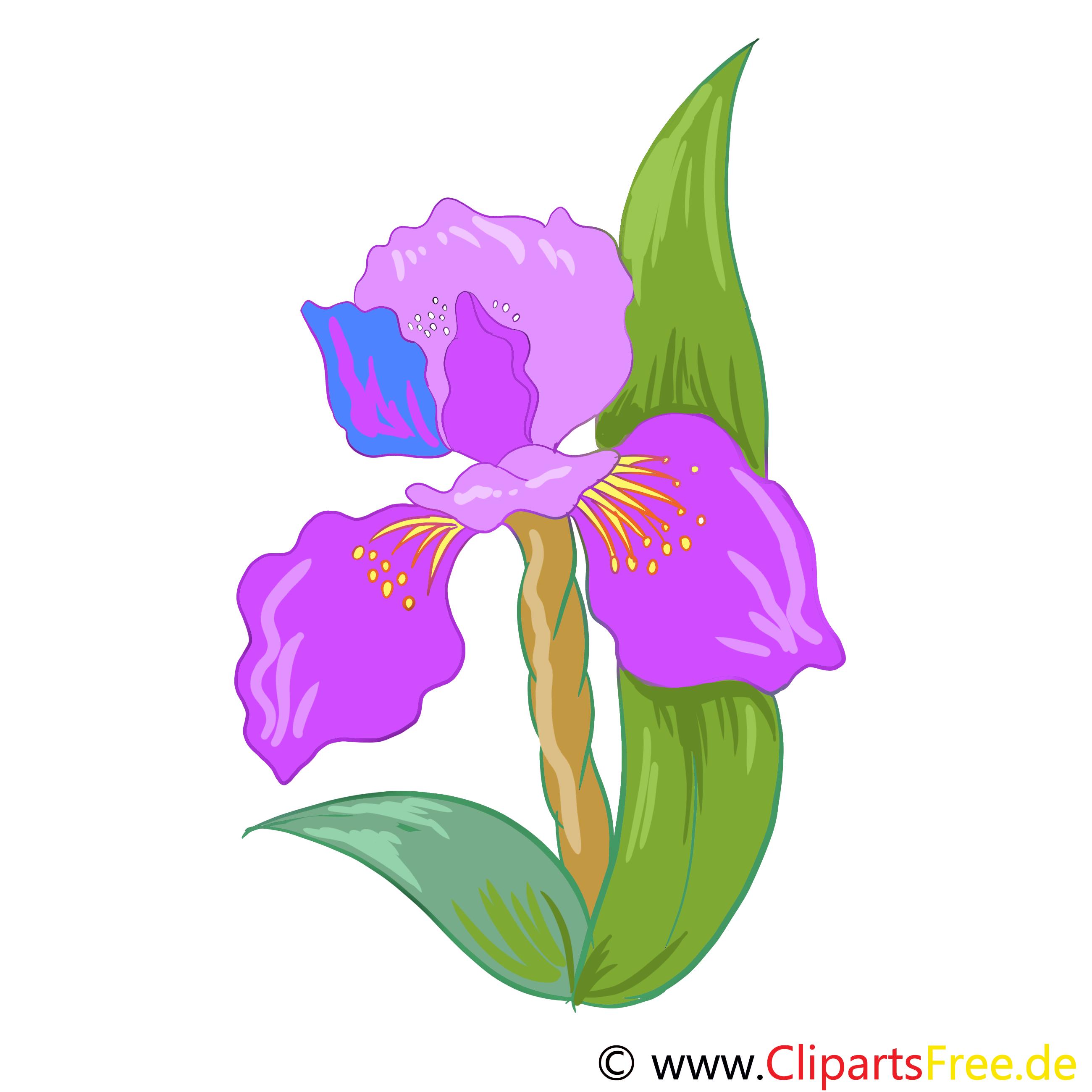 Iris cliparts gratuis – Fleurs images