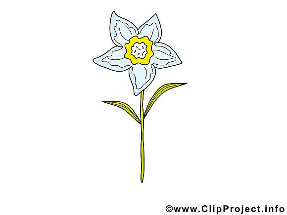 Narcisse dessin – Fleurs clip arts gratuits