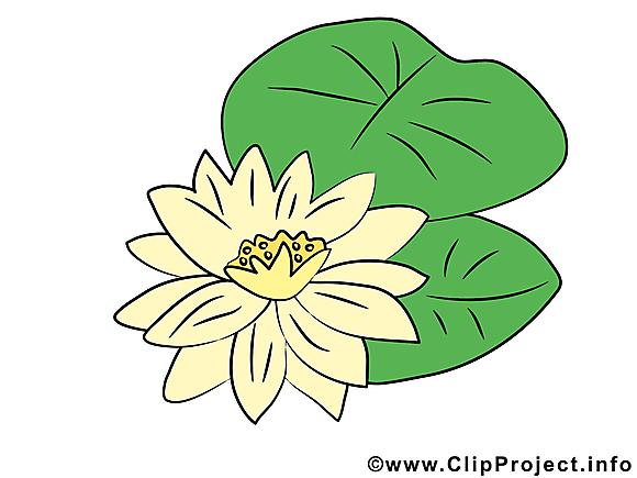 N nuphar fleurs illustration t l charger gratuite fleurs dessin picture image graphic - Nenuphar dessin ...