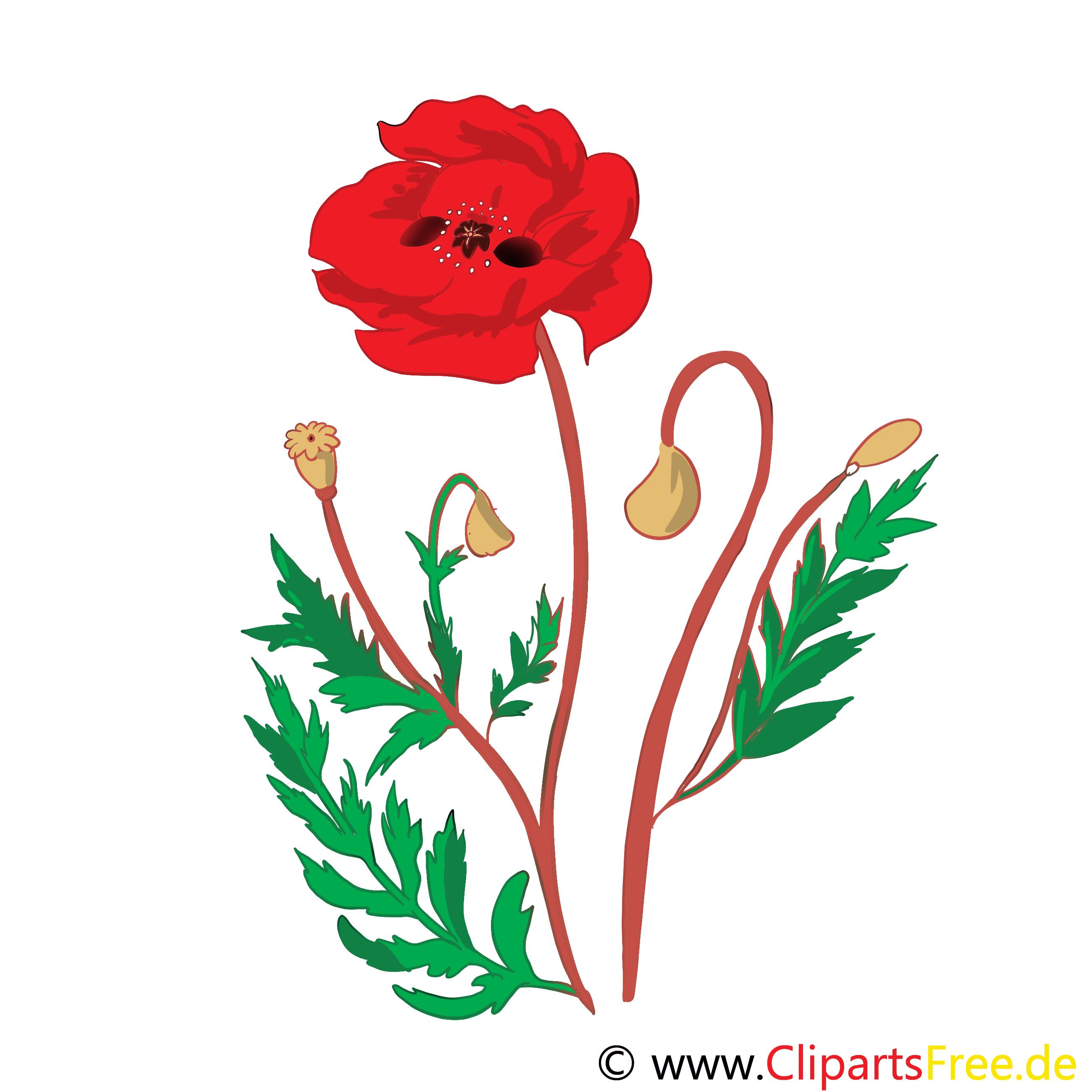 Pavot image – Fleurs images cliparts
