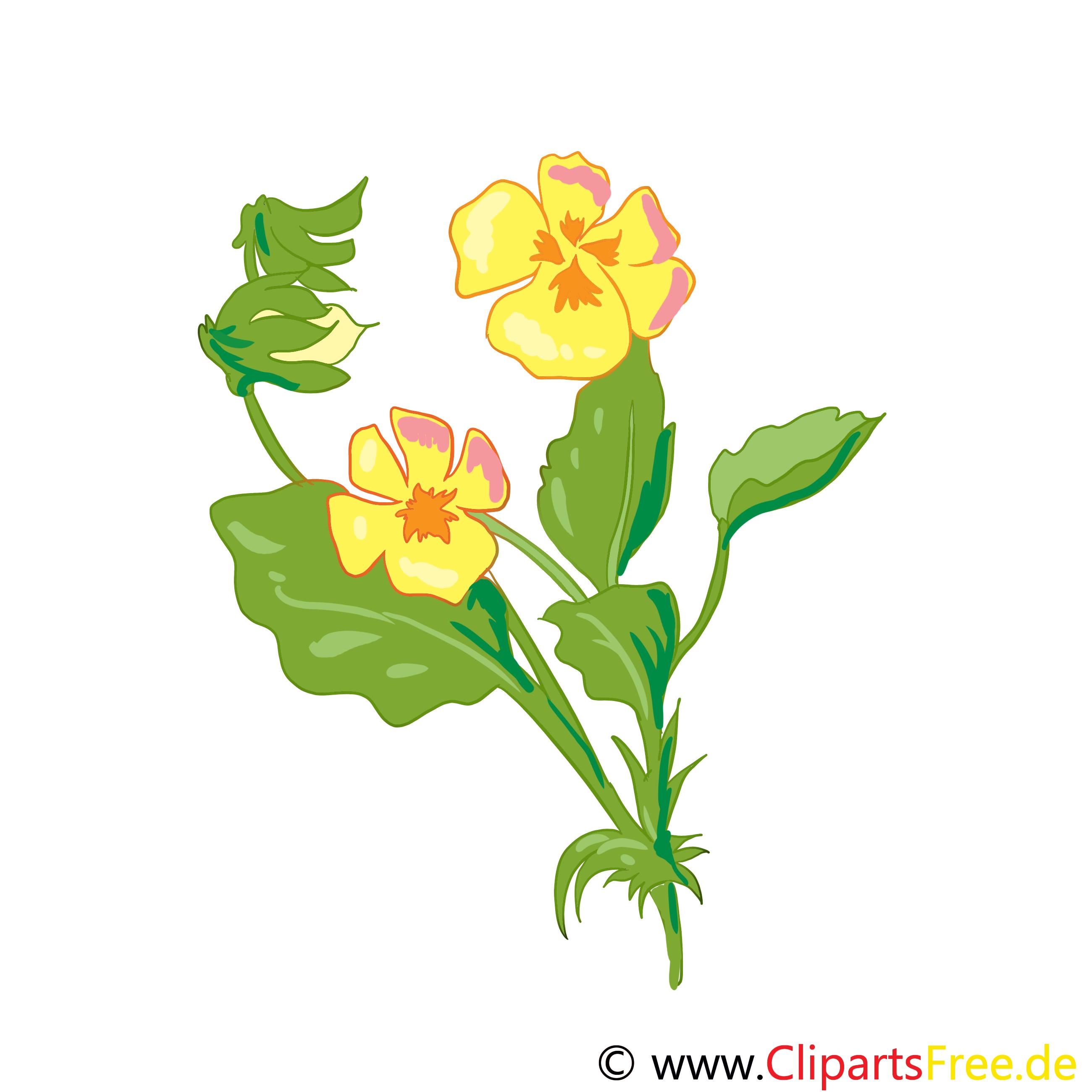 Pensée fleurs illustration à télécharger gratuite