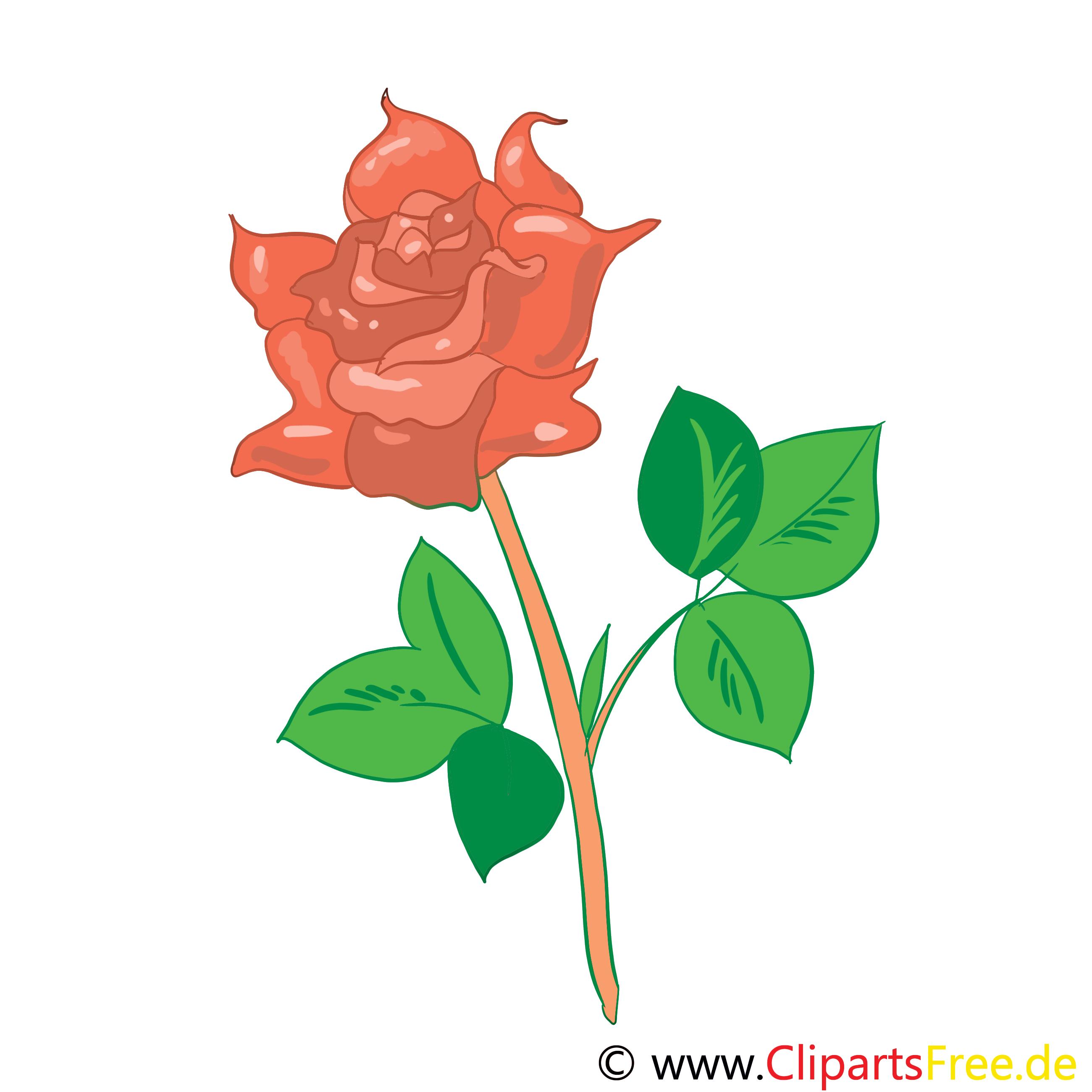 Rose dessin gratuit – Fleurs image