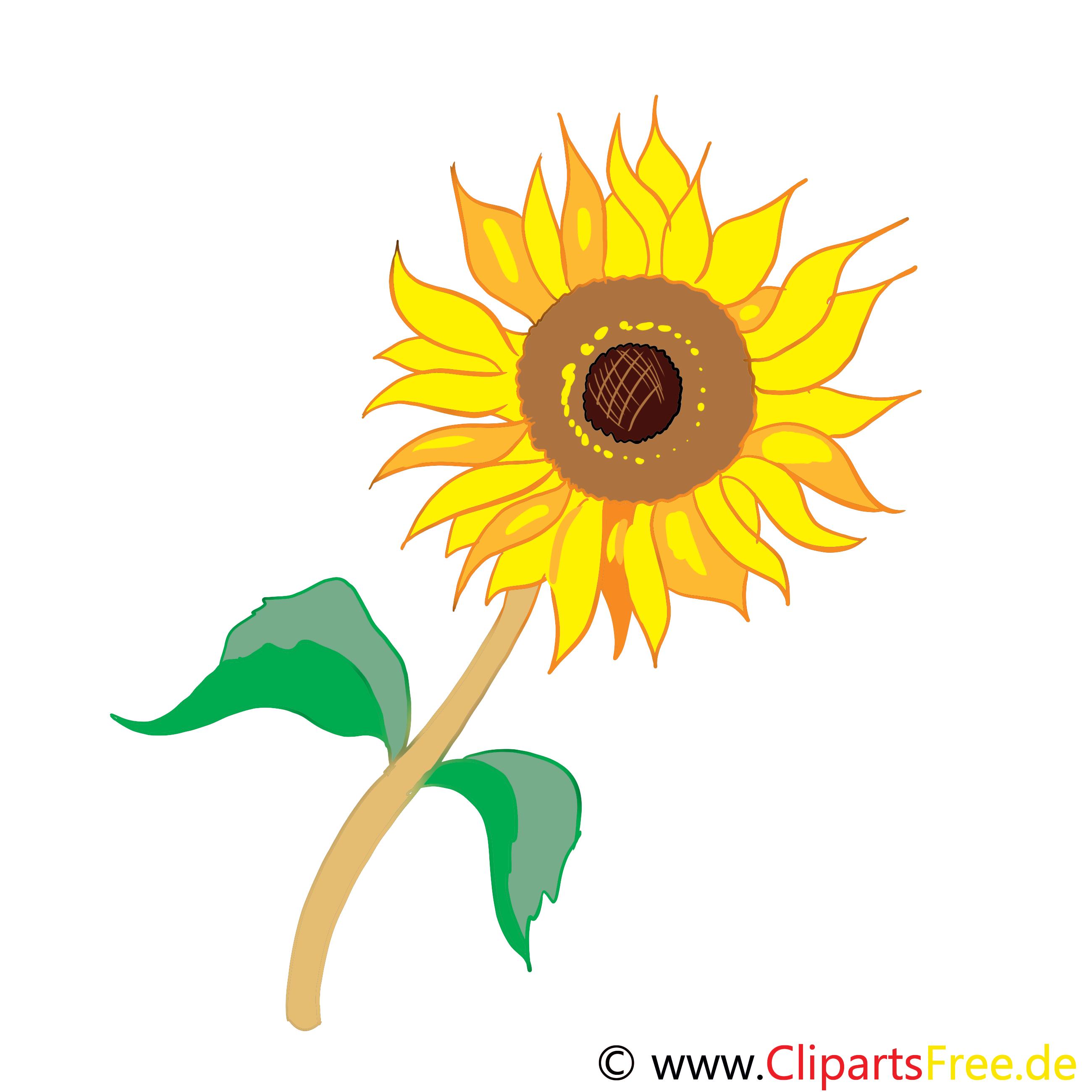 Tournesol clip art gratuit – Fleurs dessin