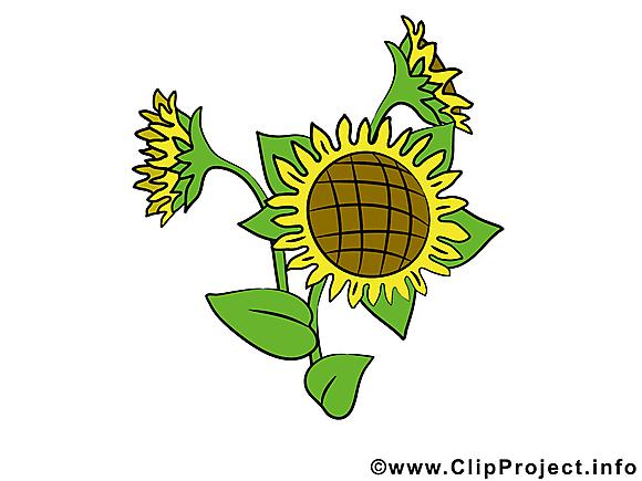 Tournesol dessin – Fleurs clip arts gratuits