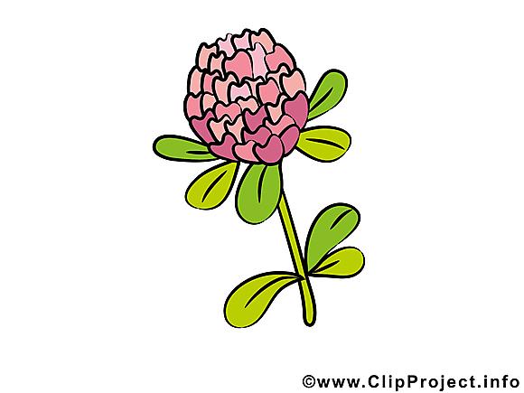 Trèfle clip arts gratuits – Fleurs illustrations