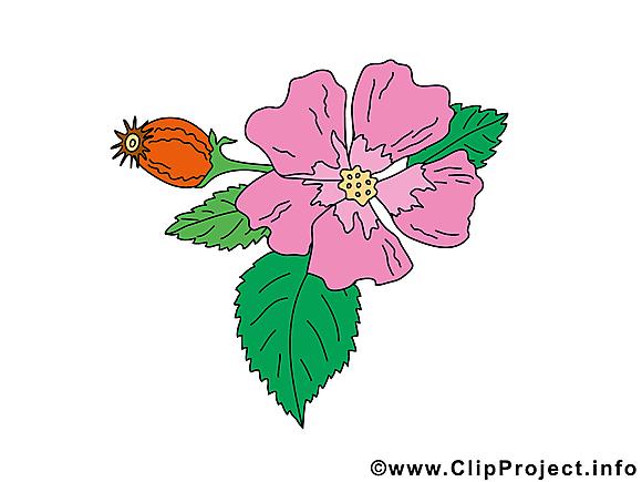 Violette cliparts gratuis – Fleurs images