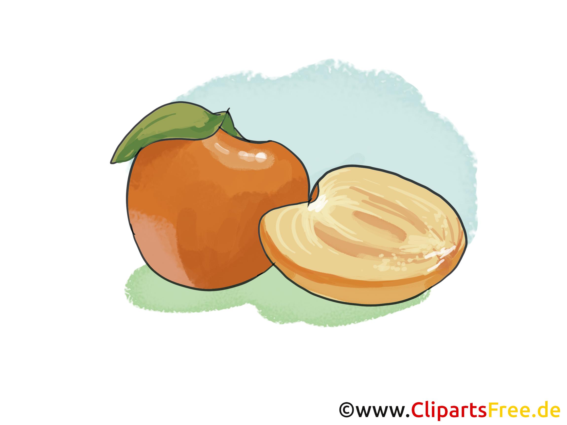Abricot fruits image à télécharger gratuite