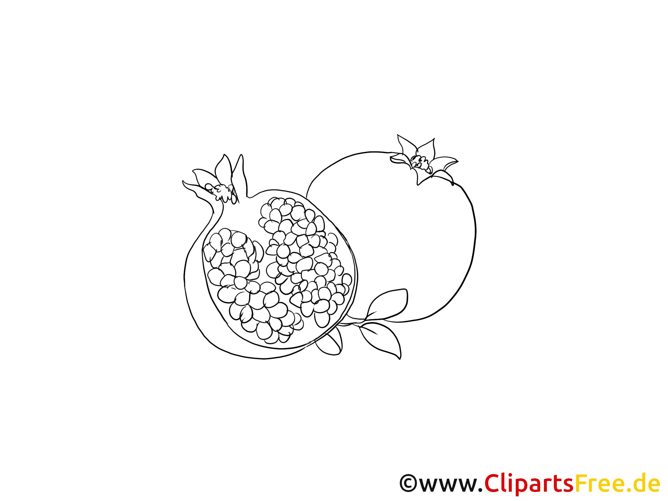 Grenade dessins imprimer fruits clipart fruits et l gumes dessin picture image graphic - Grenade fruit dessin ...