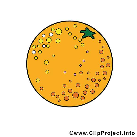 Orange dessin à télécharger - Fruits images