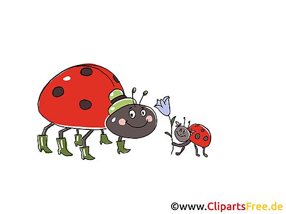 Clip arts gratuits coccinelle  illustrations