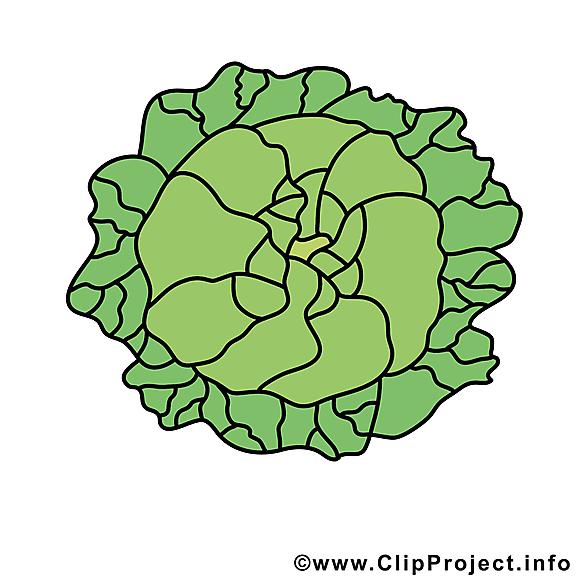 Chou cliparts gratuis - Légume images