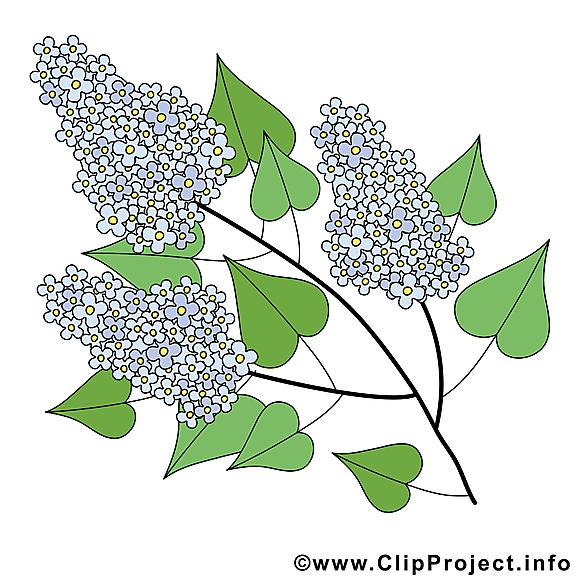 Lilas dessin t l charger printemps images printemps - Dessin de lilas ...