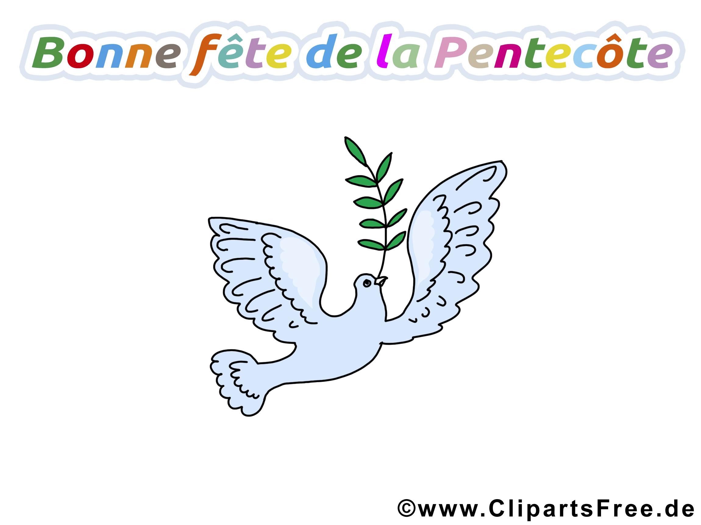 Feuille d'olivier image gratuite - Pentecôte images