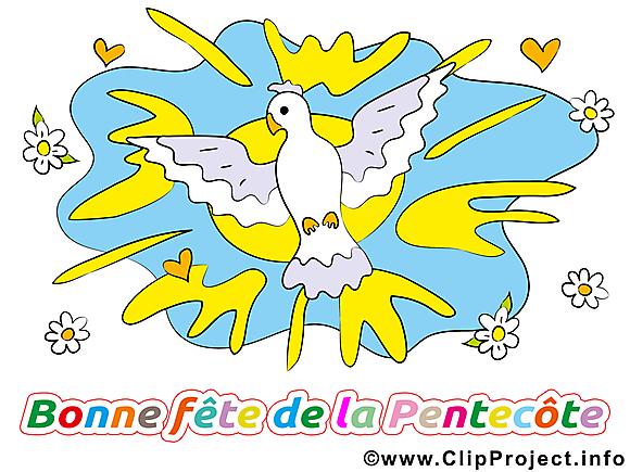 Pigeon dessin gratuit - Pentecôte image gratuite