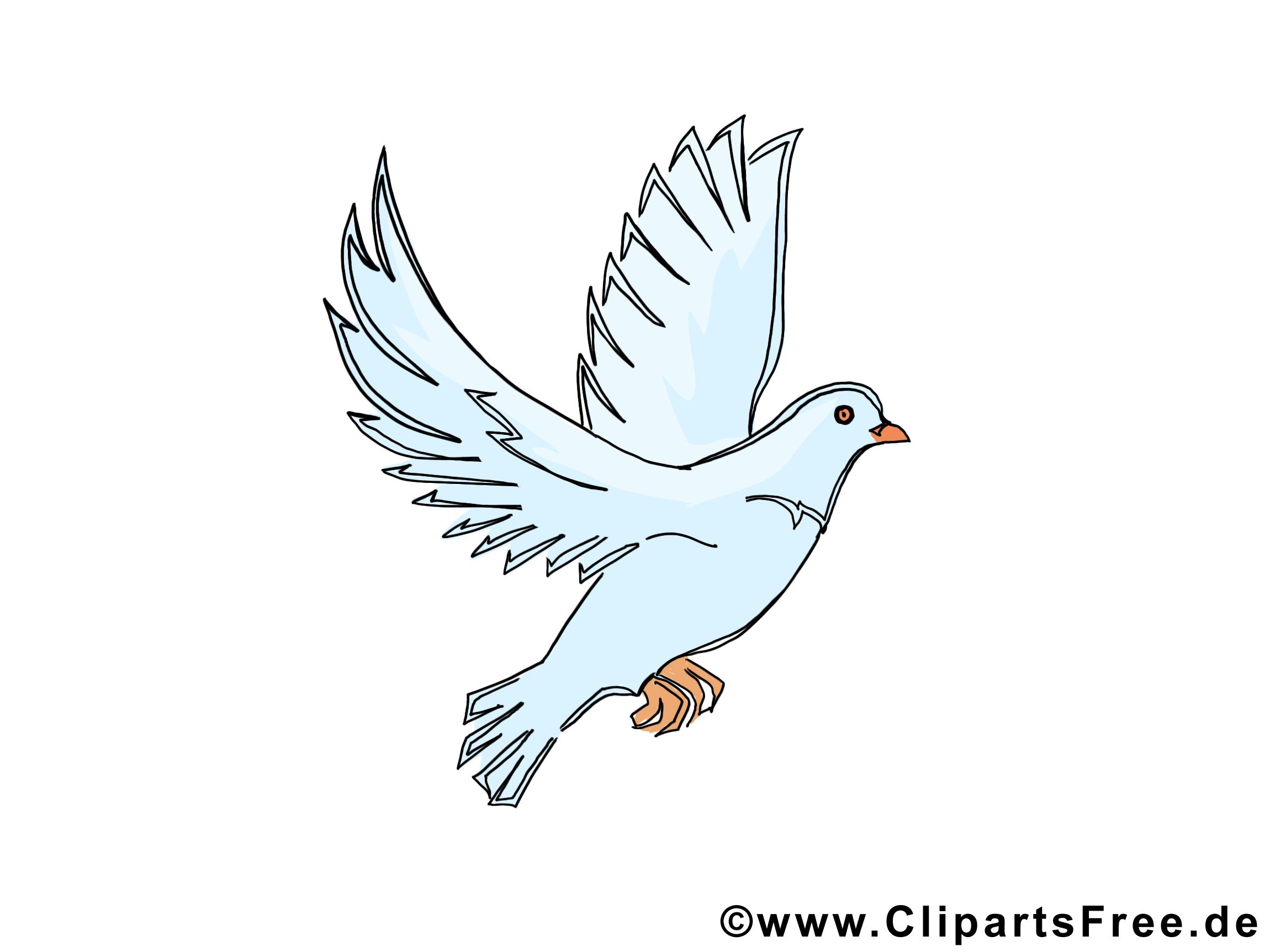 Pigeon dessins gratuits pentec te clipart gratuit pentec te dessin picture image graphic - Dessin pigeon ...