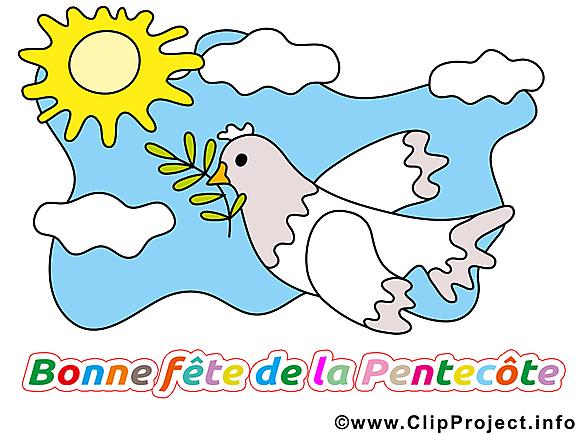 Pigeon image gratuite - Pentecôte cliparts