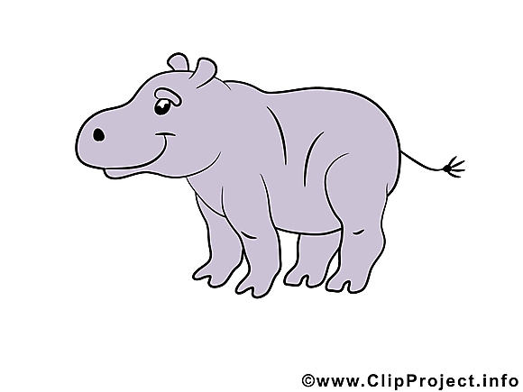 Hippopotame illustration – Animal images