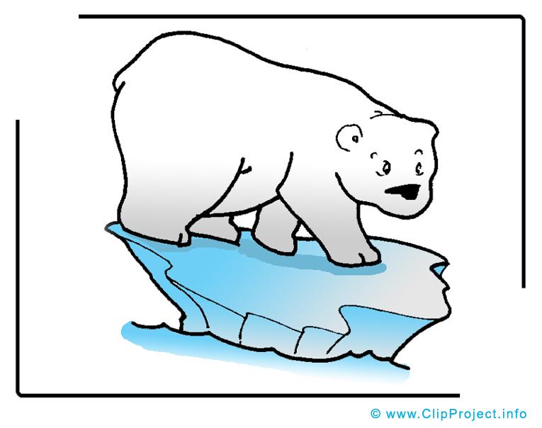Image ours polaire à télécharger – Animal clipart