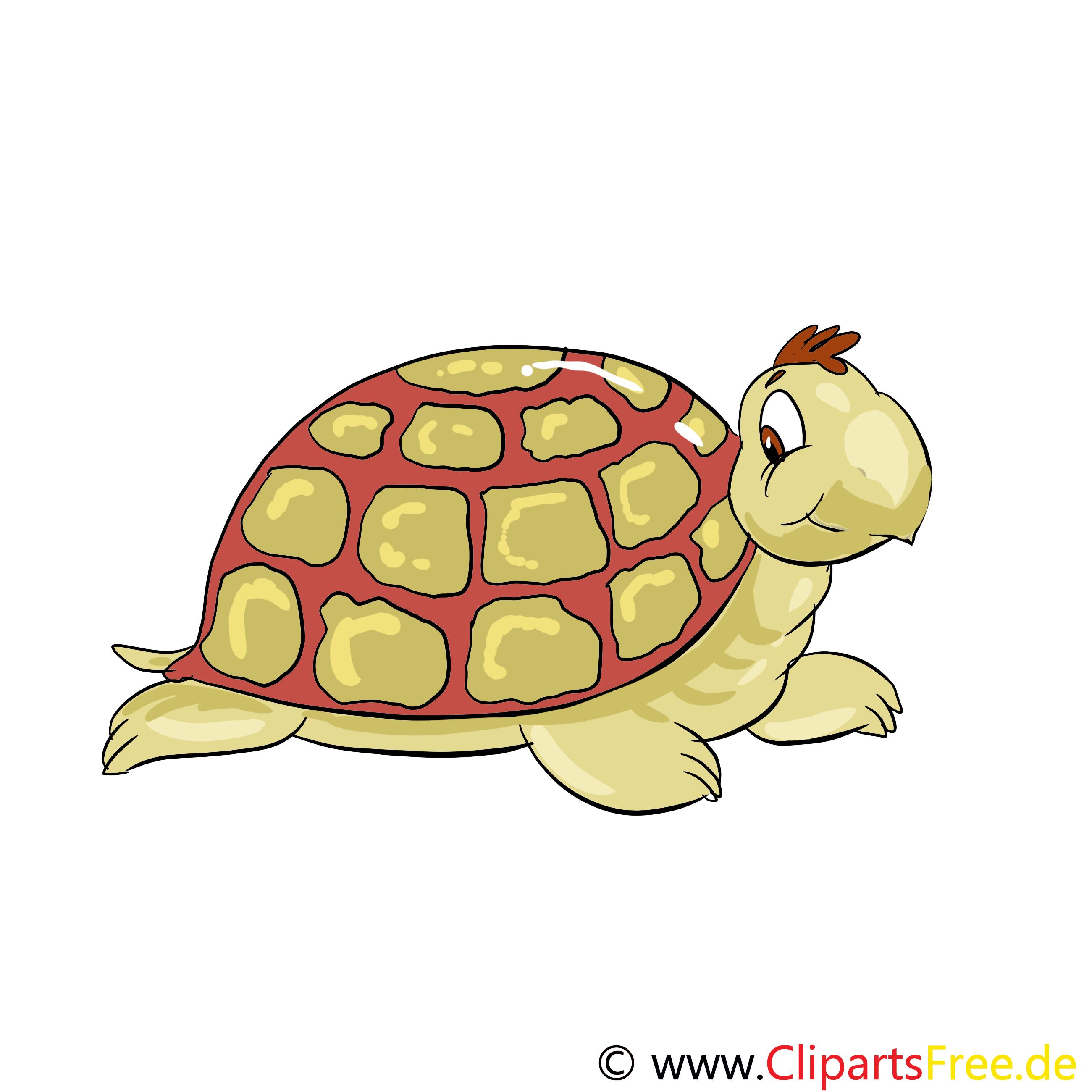 Tortue illustration – Animal images