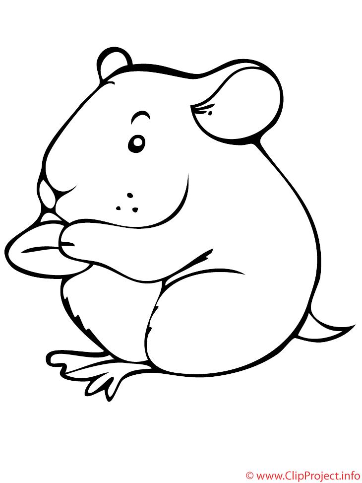 Le hamster mange coloriage animaux coloriages gratuit dessin picture image graphic clip - Hamster gratuit ...