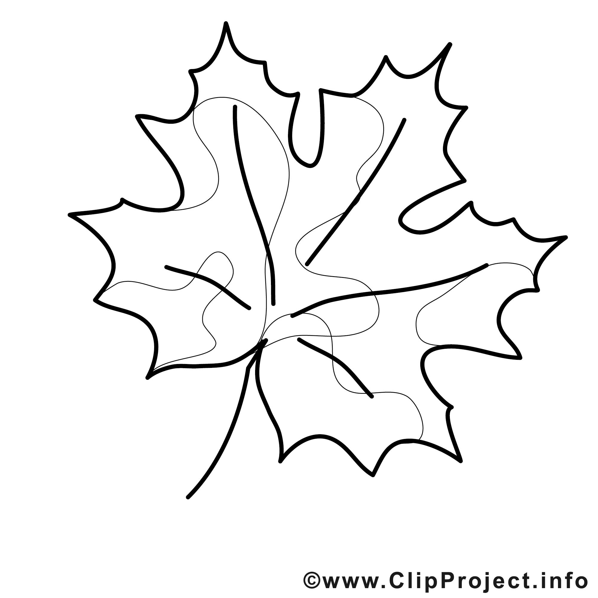 dessin feuille  coloriage automne à télécharger  automne