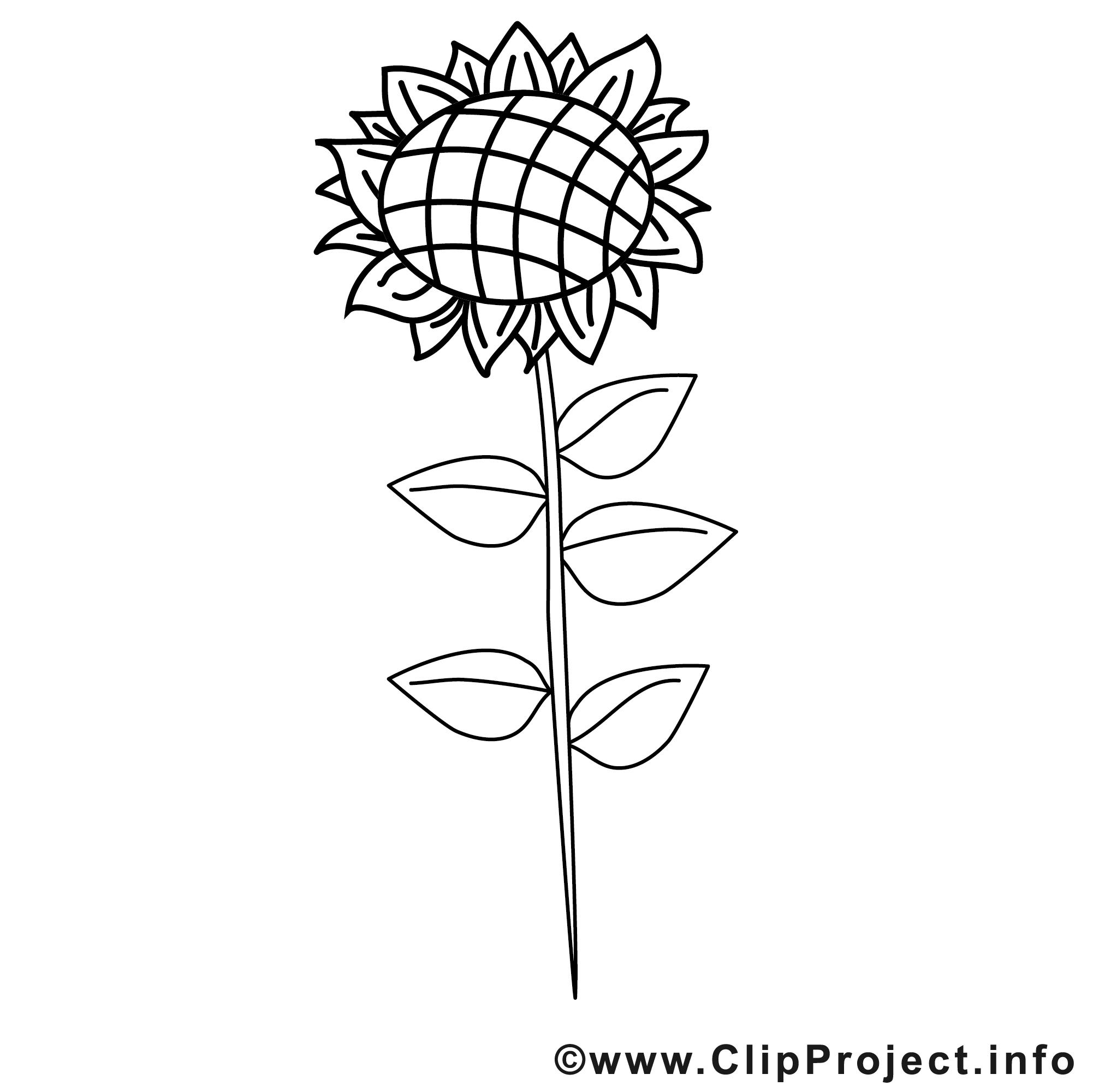 Coloriage tournesol campagne illustration t l charger ferme coloriages dessin picture - Coloriage tournesol ...